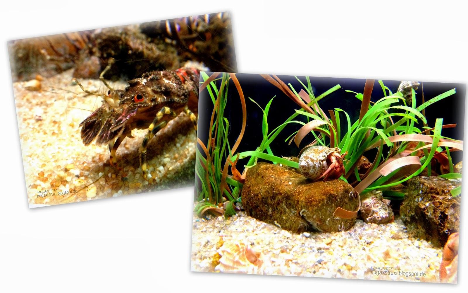 Marine Gas gepflanzt Aquarium zur Gewichtsreduktion