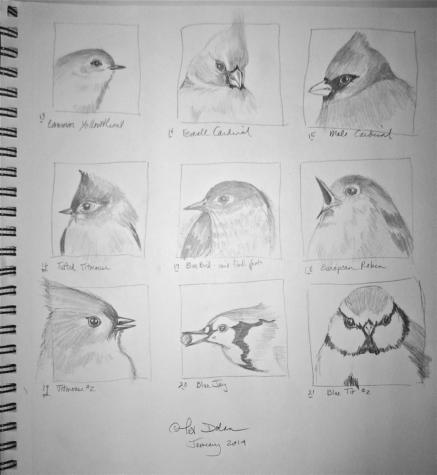 Each square is roughly 2 1 2 square allowing for a quick study of each bird noting shapes values angles etc