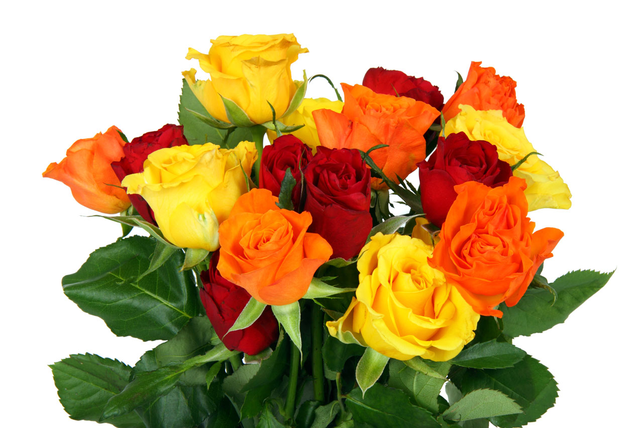 Pinteroses 5 bouquet of roses - Bunch of roses hd images ...