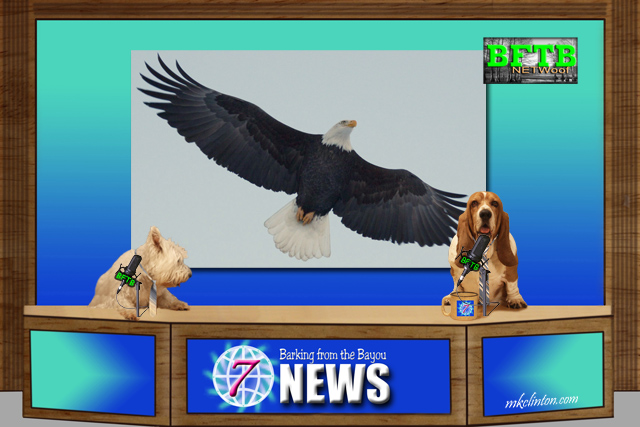 BFTB NETWoof News dog team reports on Bald Eagle