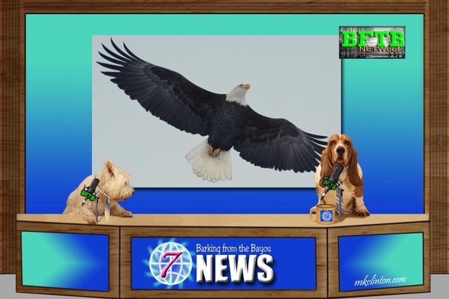 BFTB NETWoof News dog team reports on Bald Eagle