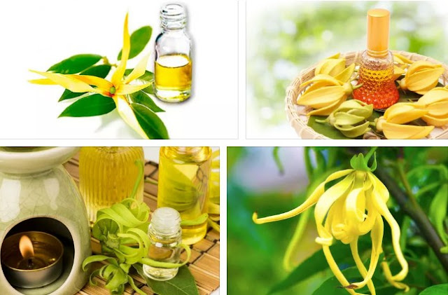 Ylang Ylang Oil good for Diabetes