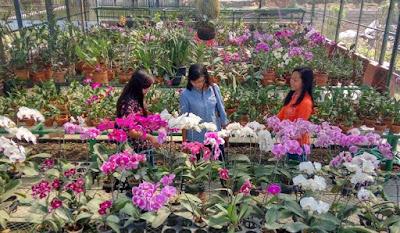Penampakan Wisata Bunga
