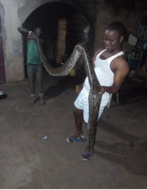 See Huge Python A Man Killed In His House In Edo State