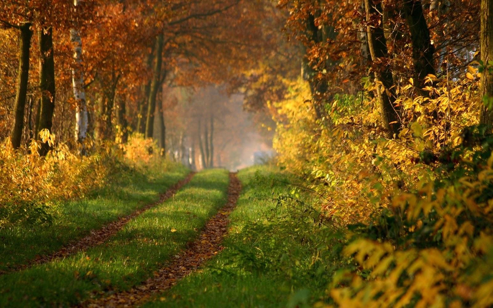 La encuentra corriendo y le paga para follar en el bosque descarga completo httpouoiorwhgd1 - 3 5