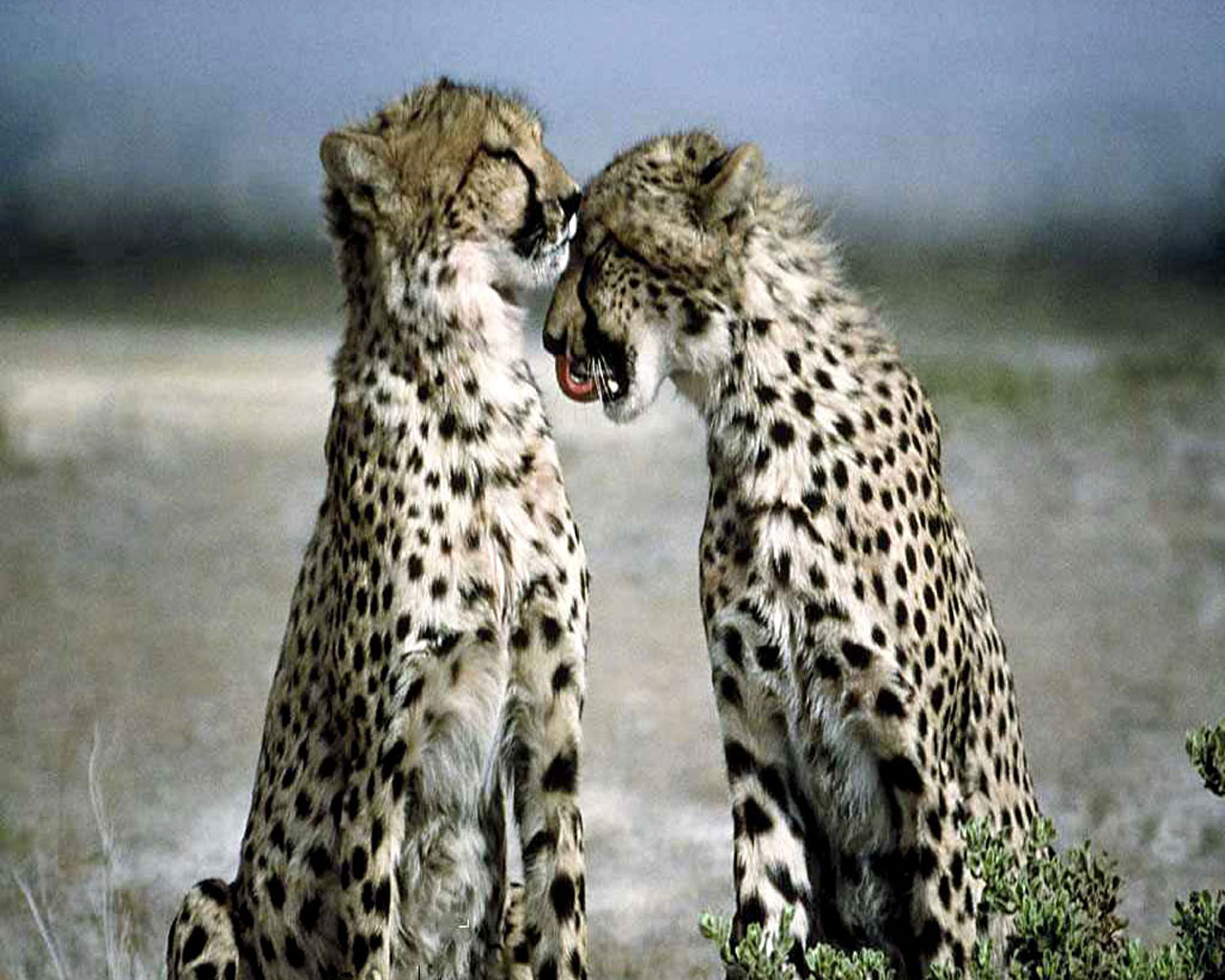 Best Jungle Life: Animal In Love | Animals In Love Pics ...