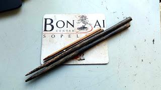 #BetiConsejo: Palillos de raíces para bonsái. ¿Cuáles, Como y de Que?