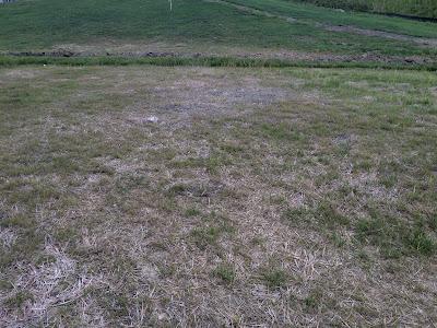 ryan homes milan yard starter grass landscaping