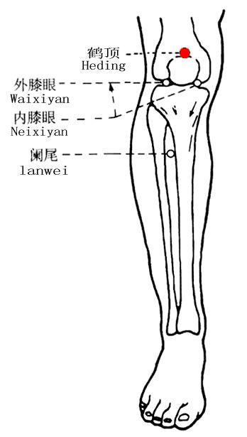 鶴頂穴位 | 鶴頂穴痛位置 - 穴道按摩經絡圖解 | Source:zhongyibaike.com