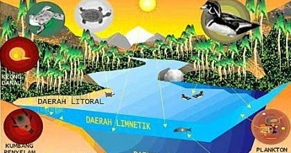 83 Gambar Hewan Ekosistem Air Tawar Gratis