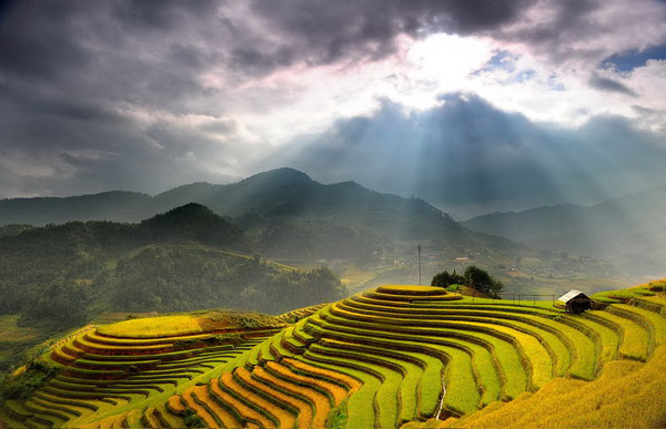 Sapa rice terrace 5