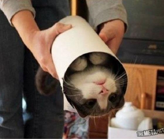 carton et chat 35