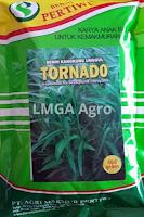 benih kangkung,benih kangkung tornado,kangkung,budidaya kangkung,sayuran hijau,lmga agro
