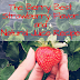 The Berry Best Strawberry Flavor and Natural Juice Recipe
