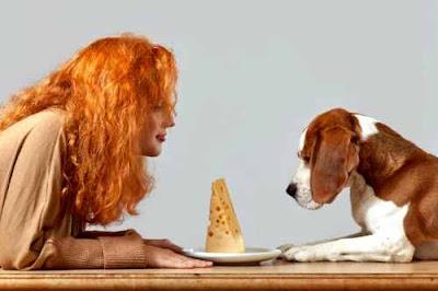 Can your dog eat cheddar or Mozzarella?