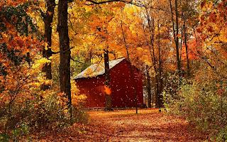 """Résultat de recherche d'images pour """"couleurs d'automne dans le sous-bois"""""""