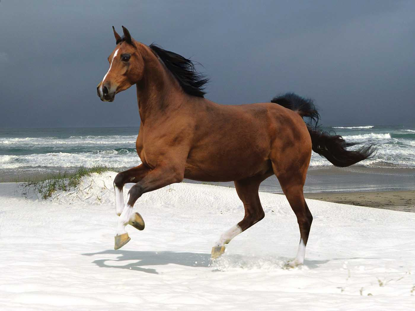 Horse Amazing Facts & New Pictures   The Wildlife