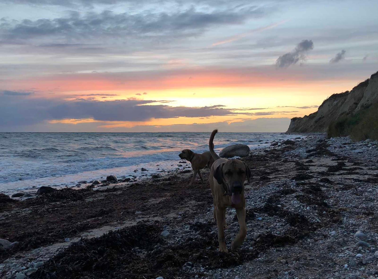Ærø ranta broholminkoira broholmer meri auringonlasku