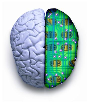compare human brain computer memory