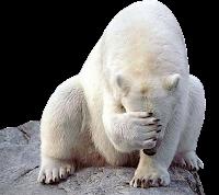 Urso branco em png