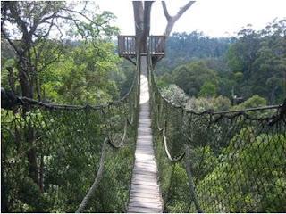 Bukit Bangkirai Yang Tinggi dan Indah Di Kalimantan Timur