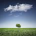 """3 Riesgos básicos del uso de """"Cloud Computing"""""""