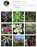 Instagram, instant plant and garden porn! See what I'm up to over there...