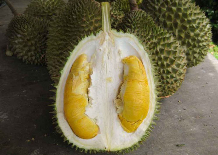 Durian 101