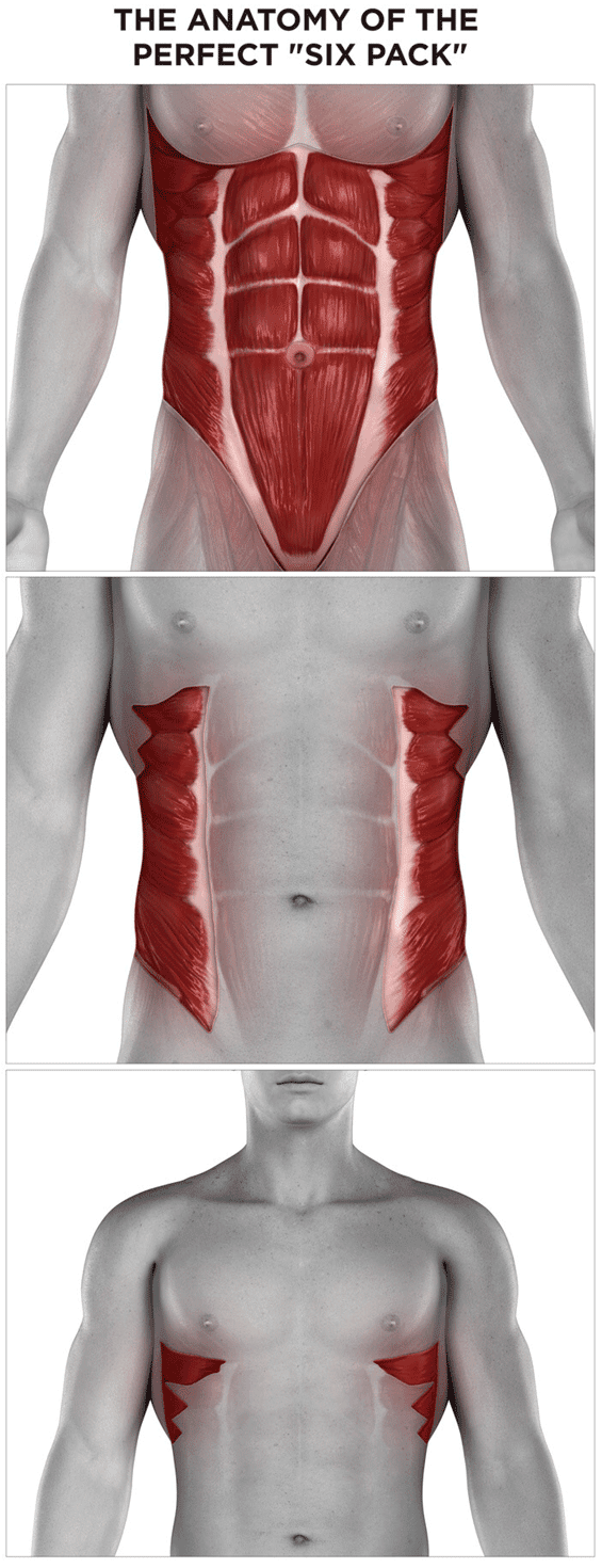 The Anatomy Of The Perfect Six Pack Find The Ab