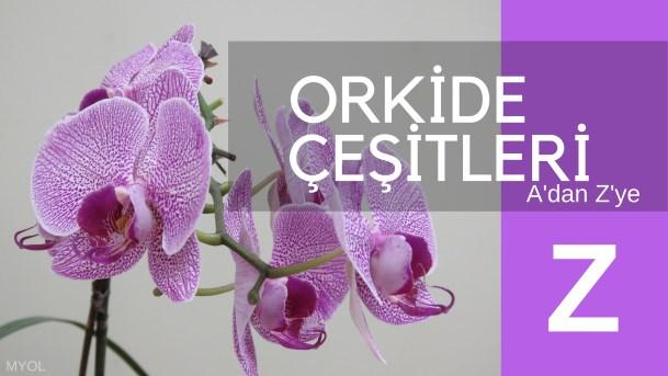 Orkide Çeşitleri Z Harfi