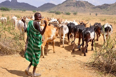 Fulani Herdsmen Have Invaded Our Farmlands for 5 Days - Abia Monarch Cries Out