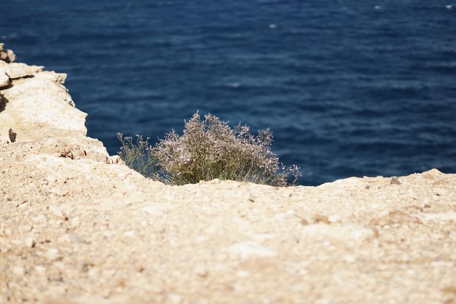 Blog + Fotografie by it's me! - fim.works - Cam underfoot - Ibiza, Portinatx - Blick auf das Meer, über die Klippe