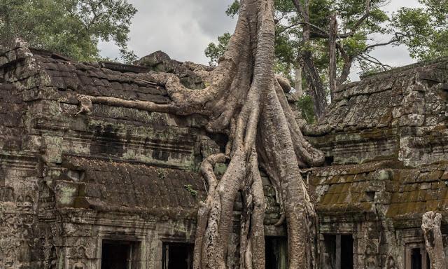 Ta Prohm Siem Reap Cambodia Temple