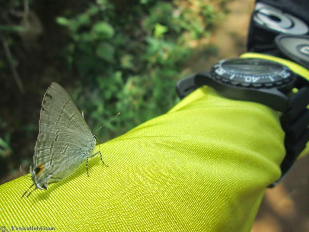 Kupu-kupu kecil ini menjadi teman perjalananku