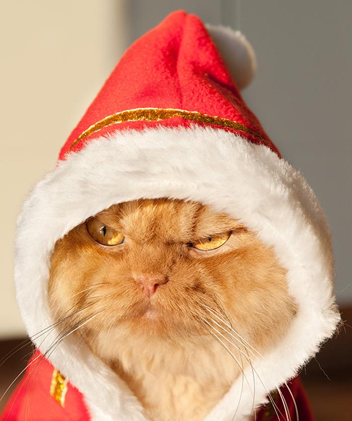 garfi-evil-grumpy-persian-cat-9