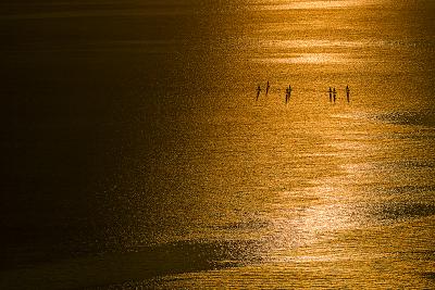 Човни на озері Женева на заході поблизу Лозанни, Швейцарія.
