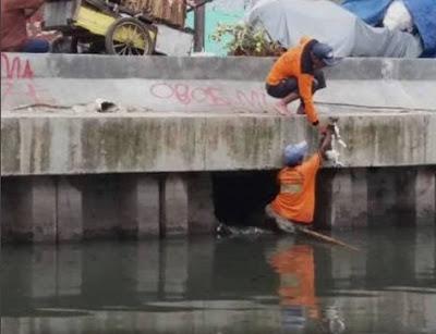 Petugas dinas kebersihan DKI selamatkan kucing liar