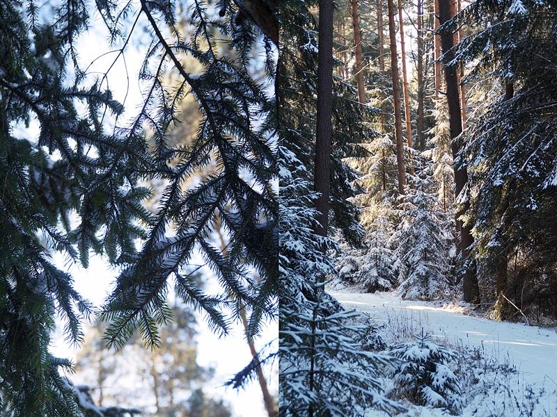 Tannenzweige und Wald im Winter bei Schnee | Tasteboykott