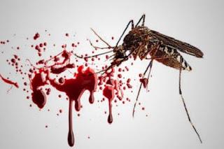 Demam Berdarah (DBD) - Pengertian, Penyebab, Gejala, Pengobatan
