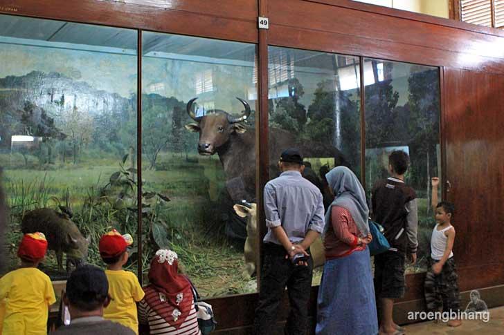 banteng biawak jalak museum zoologi bogor