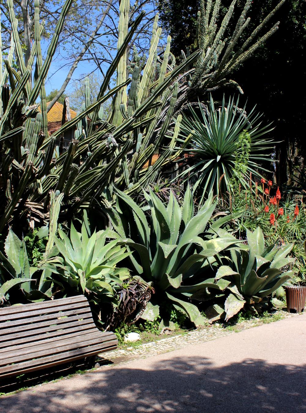 Jardim da Estrela Lissabon Park Kaktus
