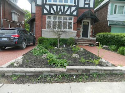 Midtown Toronto gardening services new low maintenance perennial garden before by Paul Jung