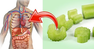 Celery Is A Natural Medicine