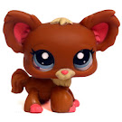 Littlest Pet Shop 3-pack Scenery Chihuahua (#1623) Pet