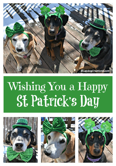 3 rescued dogs dressed up for st patricks day