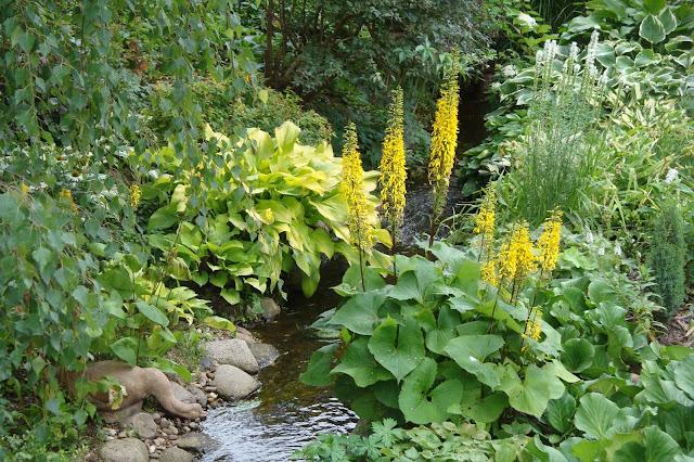 rośliny nad strumieniem, języczka