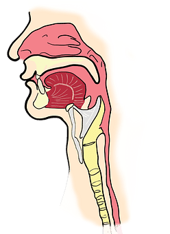 Symptoms Sinusitis - Top 12 Symptoms of Sinus Infection.
