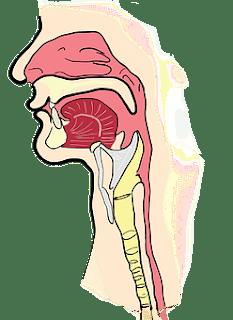 Symptoms Sinusitis - Top 12 Symptoms of Sinus Infection.