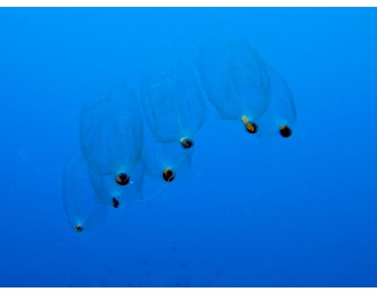 Кто невидимый жжётся и щиплется в море как крапива?
