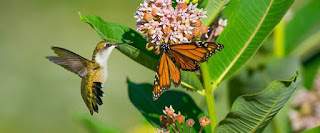 What are Pollinators and why do we need them? by Ed Powers